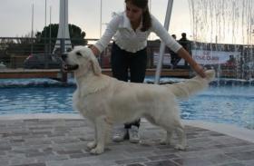 Allevamento Noor Golden Golden Retriever Nel Lazio Riconosciuto